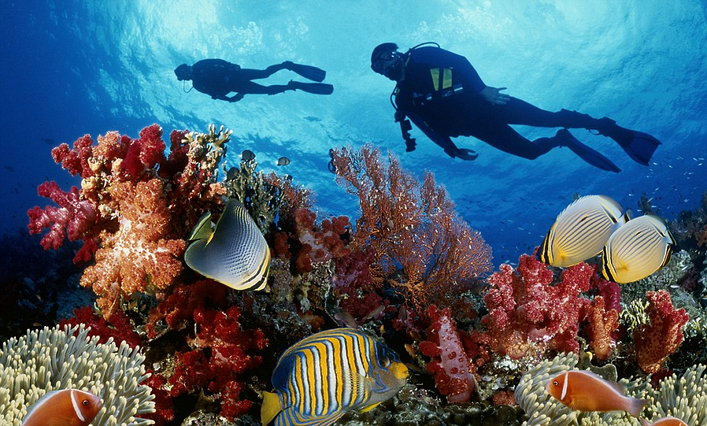 Погружение на Большом Барьерном Рифе