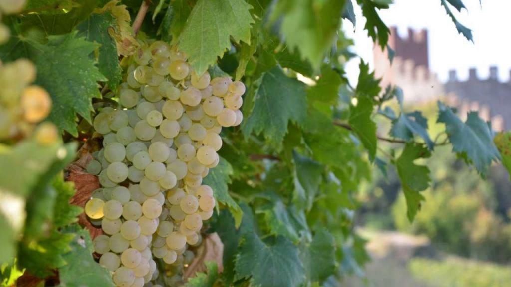 Виноградники региона Бардолино