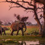 Сафари в Африке. Животные в Африке