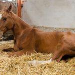 Инфекционная анемия лошадей (ИНАН): причины, симптомы, диагностика, лечение, профилактика