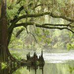 Национальный парк Эверглейдс (Everglades): описание, фото, интересные места