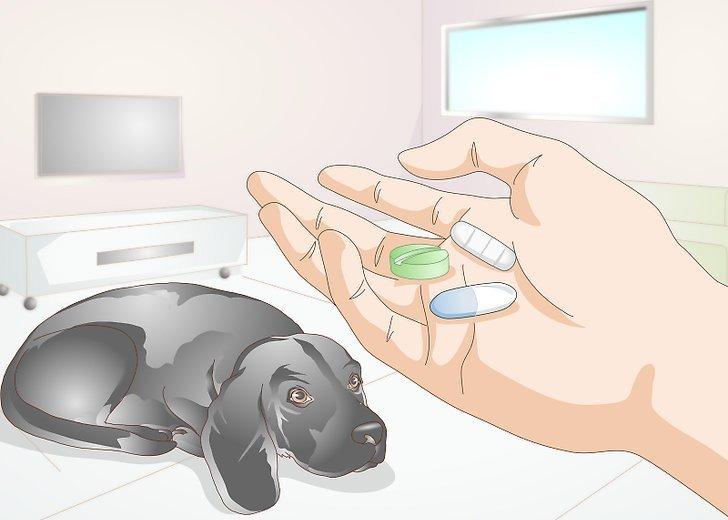 лечение дирофиляриоза у собак