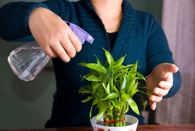 как оживить растение
