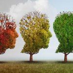 Методика «Три дерева»: цель теста, инструкция, интерпретация результатов
