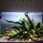 Как часто нужно менять воду в аквариуме с фильтром и без?
