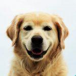 Антиаллергенный корм для собак: список, рейтинг лучших, производители, состав и рекомендации ветерин...