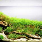 Кладофора в аквариуме: содержание, размножение и методы борьбы