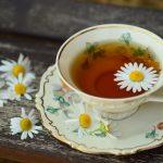 Как вырастить чай в домашних условиях? Чай (растение): описание, особенности выращивания