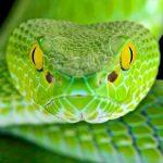 Сонник. Змеи в доме: к чему снится, что предвещает