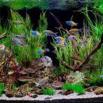 Как обустроить аквариум: практические советы и рекомендации по уходу