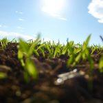 Рациональное использование земли: понятие и функции земли, принцип использования