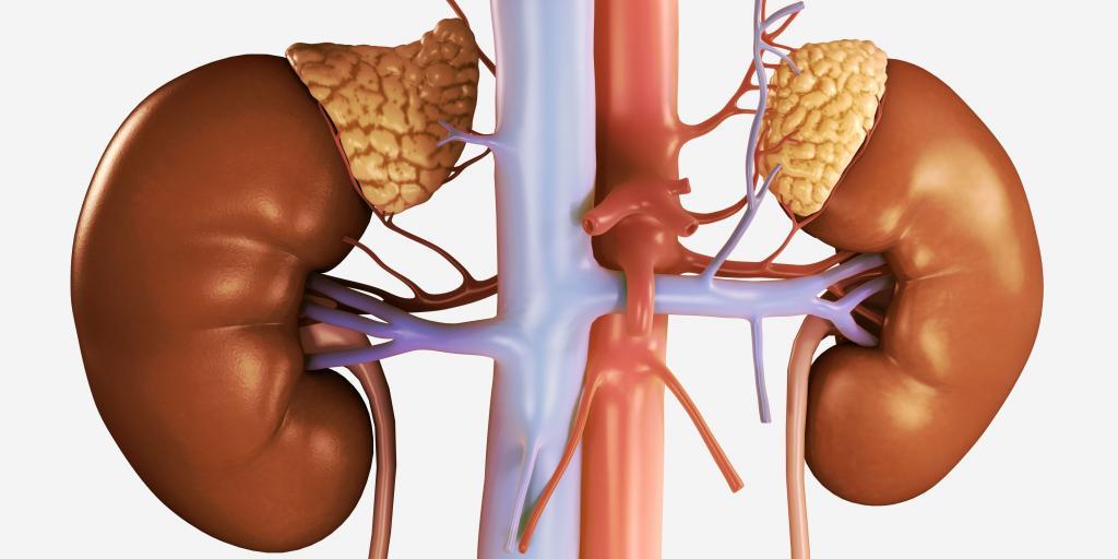 гормональная регуляция функций