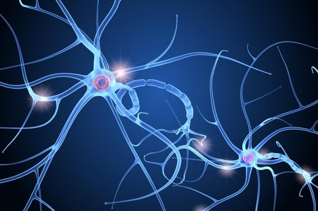 клетка нервной системы
