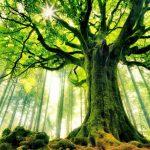 Старое или молодое: как определить возраст дерева?