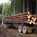 Экономическая оценка природных ресурсов: понятие, цели и основные принципы