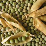 Рецепт приготовления браги на горохе