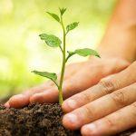 К чему снится сажать дерево: значение сна, толкование и выбор сонника