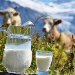 Пороки молока: виды и описания. Анализ качества и ГОСТы молока