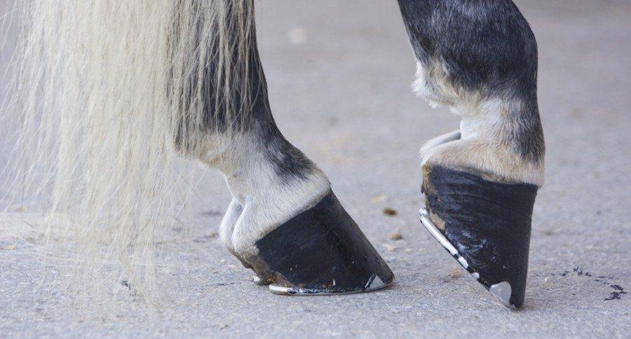 строение копыт лошади