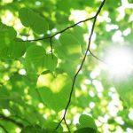 Участие в фотосинтезе растений, выделяющих кислород