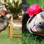 Сонник. Беременная собака к чему сниться может?