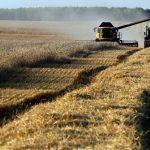 Аграрный сектор - это... Особенности, развитие и проблемы аграрного сектора РФ