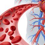 Кардиореспираторная система человека: основные функции и показатели