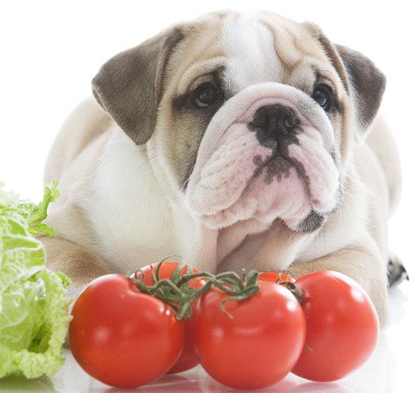 Можно ли собакам помидоры