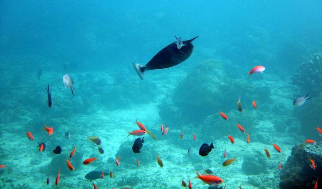 Места обитания рыбы-единорога