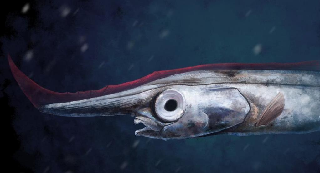 Единорог рыба-гребень