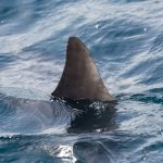 Суп из акульих плавников: рецепт приготовления с фото