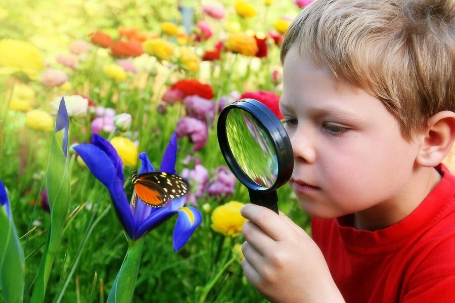Изучает бабочку
