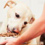 Корм для собак с низким содержанием белка: обзор и отзывы
