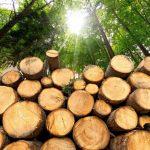 Лесозаготовка - это... Лесозаготовка в России