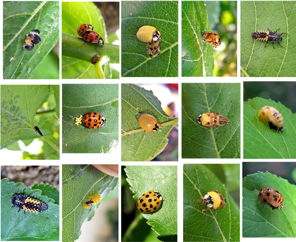 Биоиндикаторы в природе