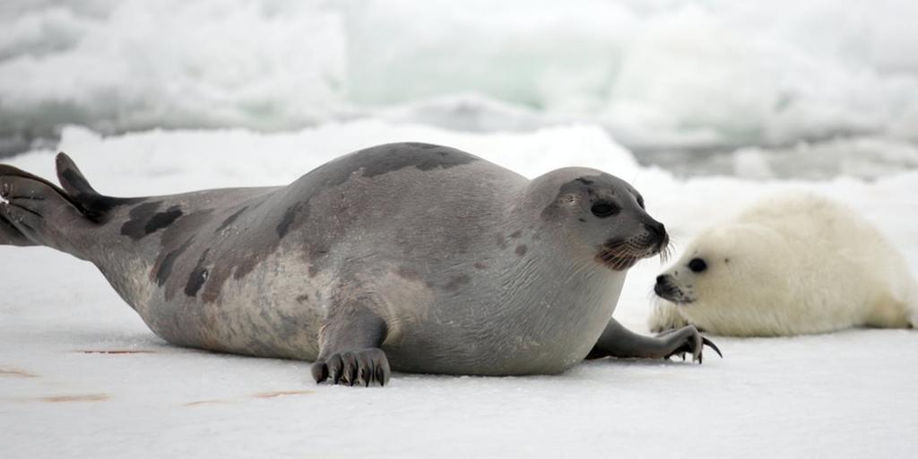 морские обитатели белого моря