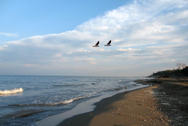 берего белого моря