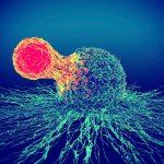 Капли для иммунитета: рейтинг, инструкция по применению и отзывы