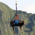 Перевозка скота: способы, требования, документы