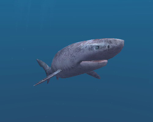Акула полярная