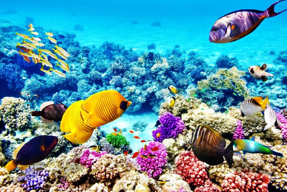 Экосистема Большого Барьерного Рифа