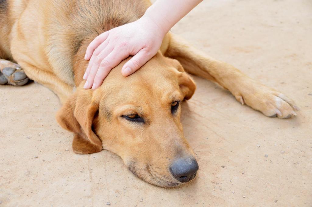 симптомы заболевания печени у собак