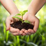 Саженцы - это качественный материал для вашего сада