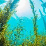 Подводные растения: виды, названия и описание