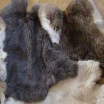 Как выделывать шкуру кролика своими руками в домашних условиях