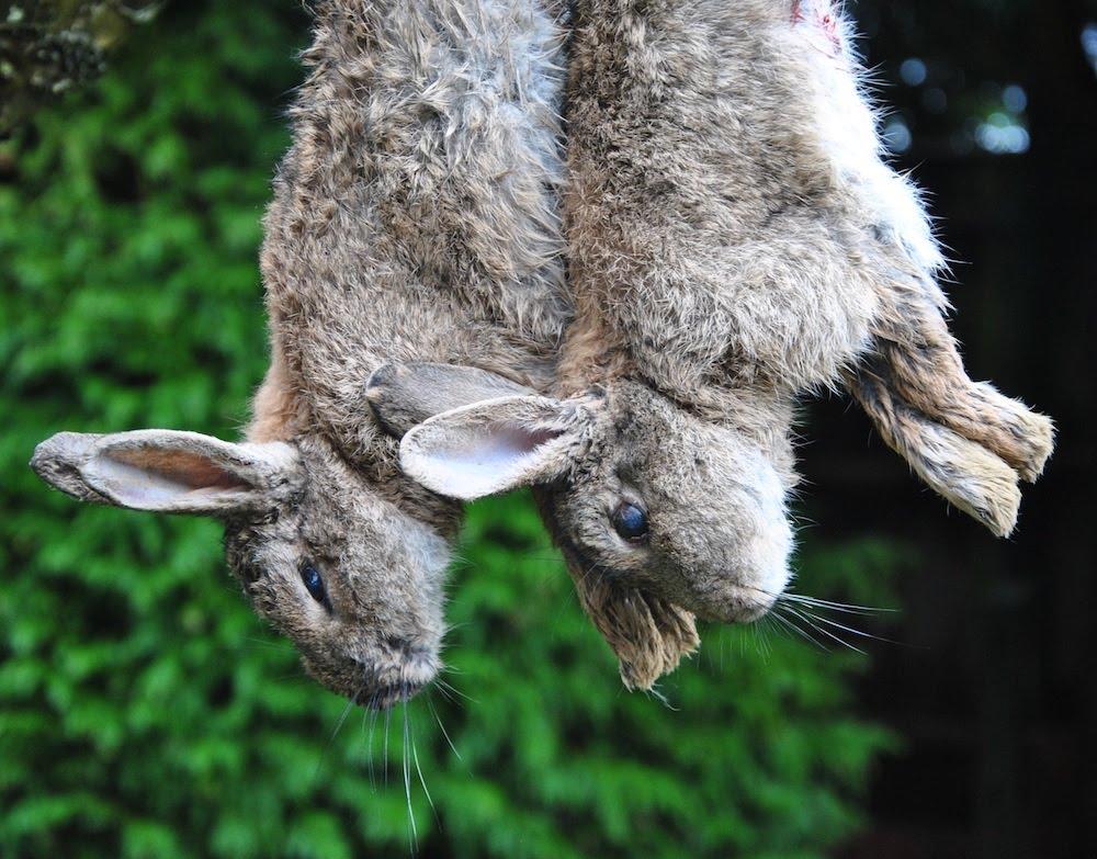 Кролики в ожидании выделки