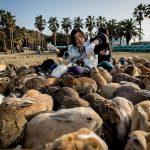 Остров кроликов в Японии: описание, история, фото