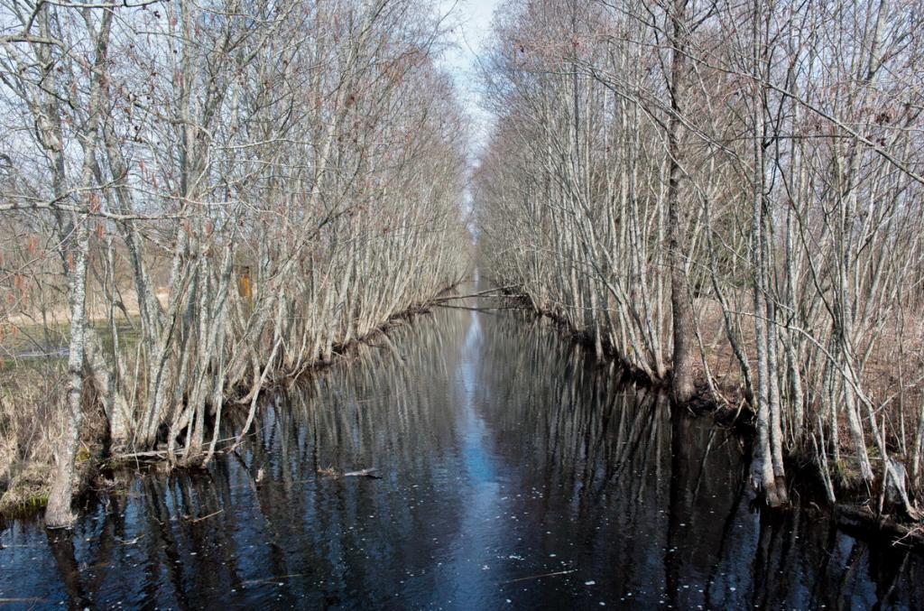 река Ельня