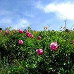Природа Кузбасса: разнообразие флоры и фауны, полезные ископаемые, красота окружающей среды и обзоры...