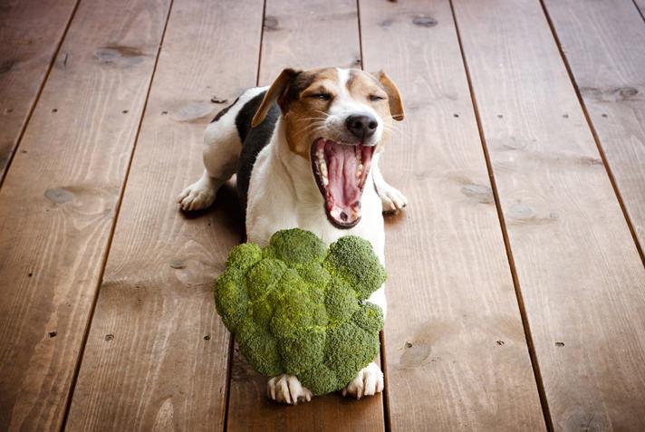 собака и брокколи